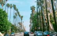 Palm trees from Los Angelos